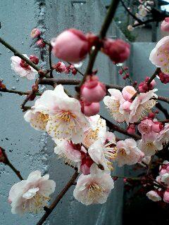image/ne-tan-2006-03-07T10:30:28-1.jpg