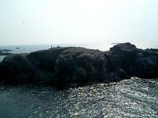 海猫島.jpg