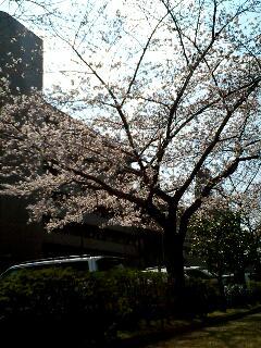 image/ne-tan-2006-04-03T14:14:26-1.jpg