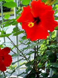 image/ne-tan-2006-07-19T11:50:19-1.jpg